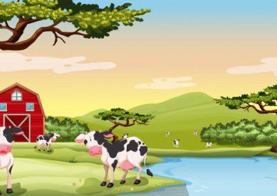 quality cow